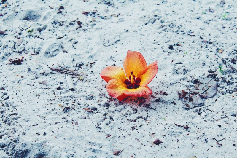 The white sand is topped with flower beauty.