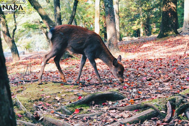 Hi, deer!
