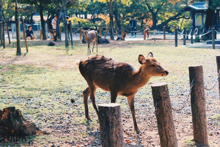 Oh deer, a model!