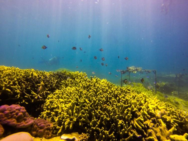 Vietnamese's seas are no stranger to corals