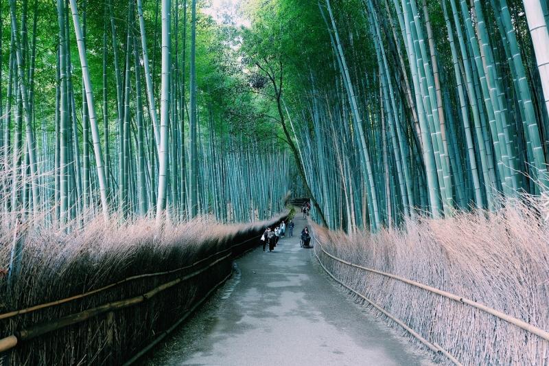 Rừng tre Arashiyama