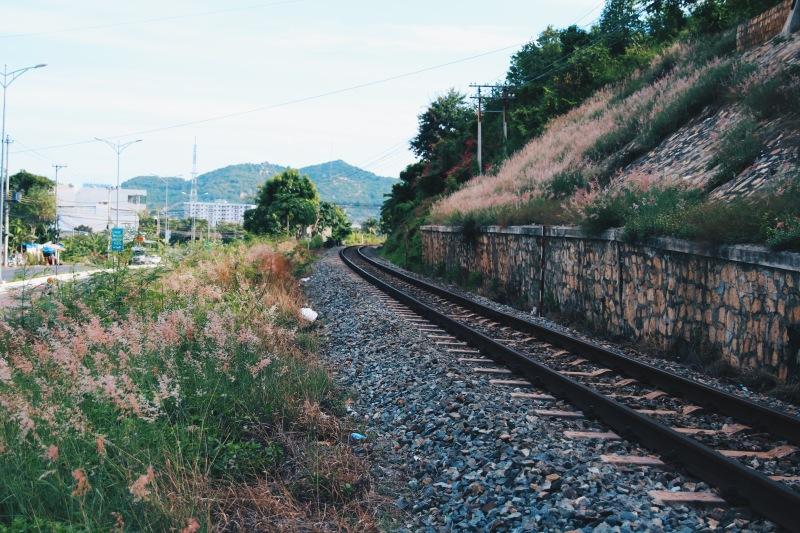 Pink Reeds