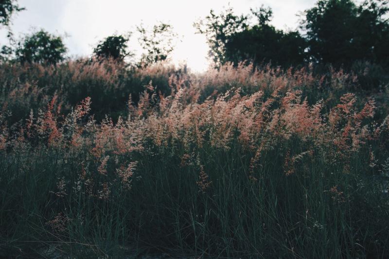 Pink reeds slope