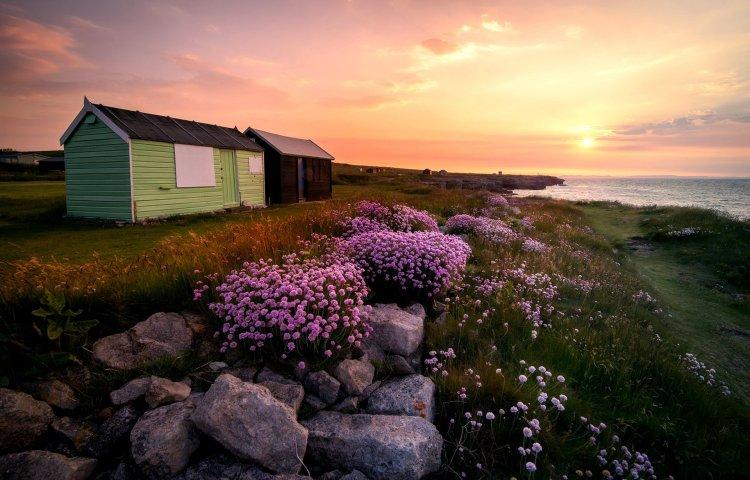 england_flowers_island_portland_dorset_united_kingdom_england_flowers_rocks_huts_sun_sunrise_landscape_1920x1230