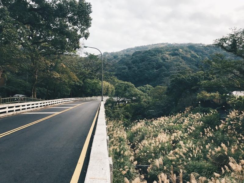 Cánh đồng hoa cỏ lau bát ngát bên vệ đường