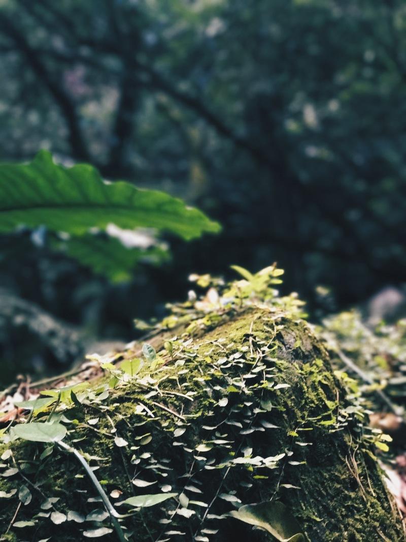 Thực vật ở Yangmingshan