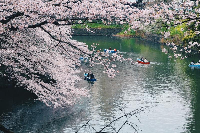 Công viên Chidoriga-fuchi | Chidoriga-fuchi Park