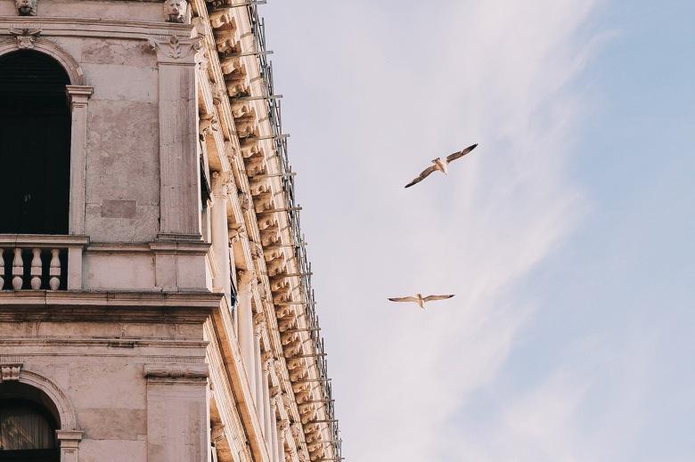 Seagull Venice Sunset