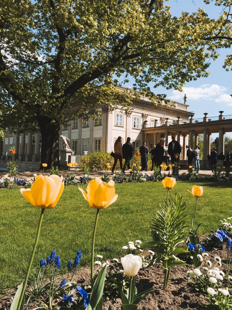 Lazienki Palace Tulip