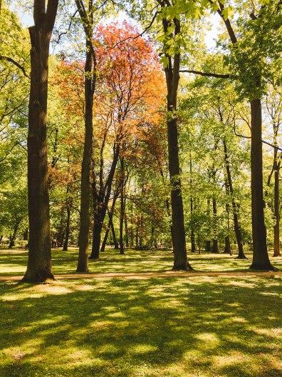 Lazienki Park Trees