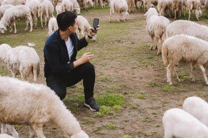 Capture Lý Thành Cơ Đàn Cừu Suối Nghệ