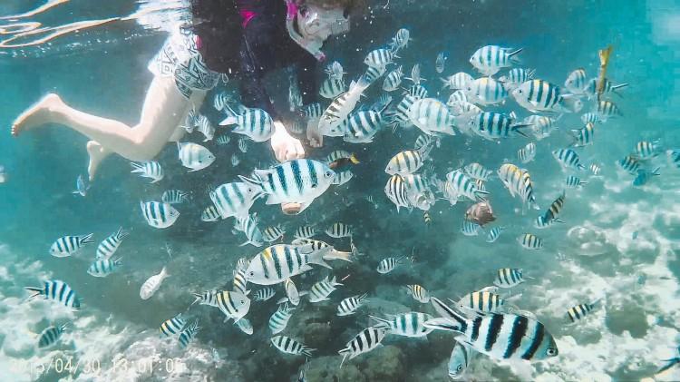 Fish Cebu Philippines