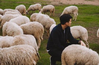 Lý Thành Cơ Đàn Cừu Suối Nghệ photo