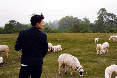 Lý Thành Cơ Đàn Cừu Suối Nghệ sheep farm