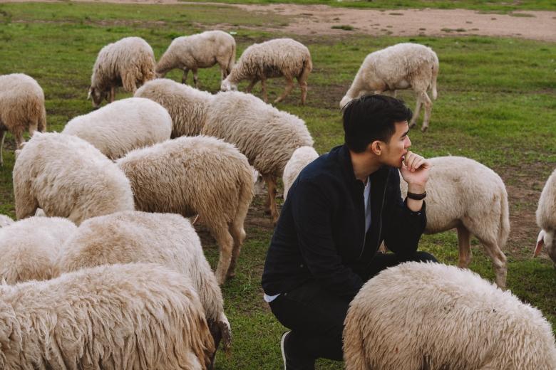 Lý Thành Cơ Đàn Cừu Suối Nghệ