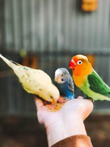 Cho chim ăn tại Zoodoo