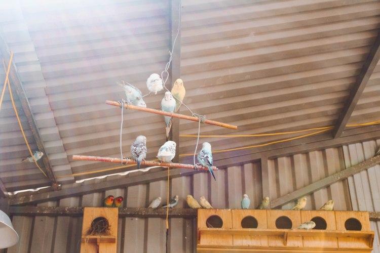 Chuồng chim tại Zoodoo