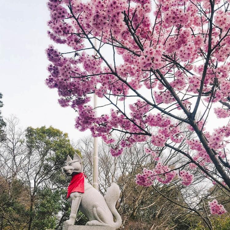 Day 7 Kyoto Sakura