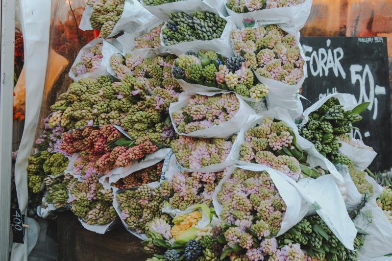 Hoa tại khu chợ Copenhagen