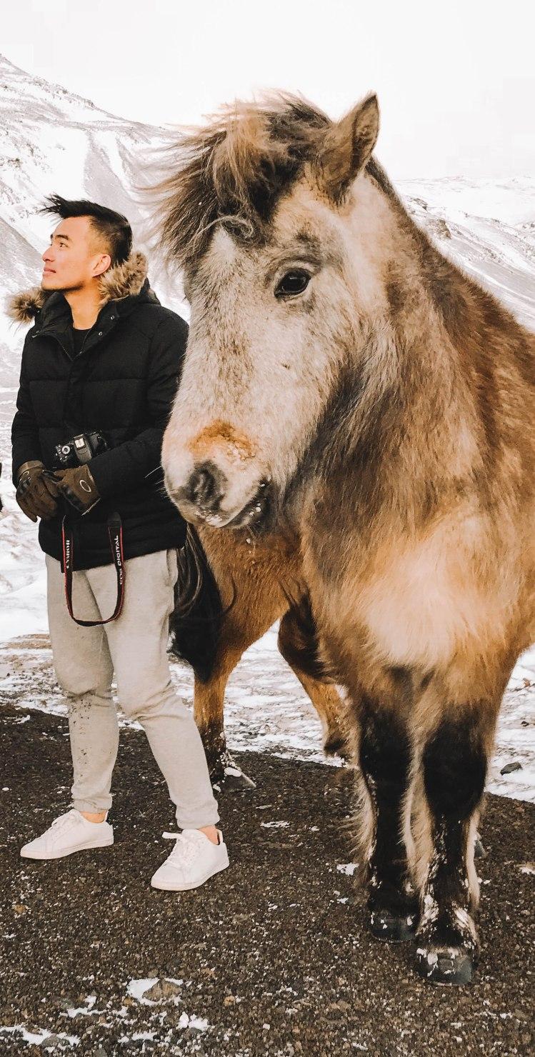 Ngựa Iceland và Lý Thành Cơ tạo dáng