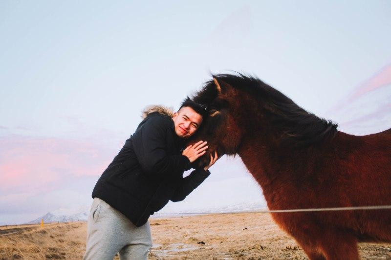 Ngựa Iceland và Lý Thành Cơ