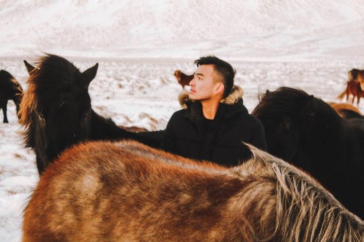 Ngựa Iceland và Lý Thành Venturology