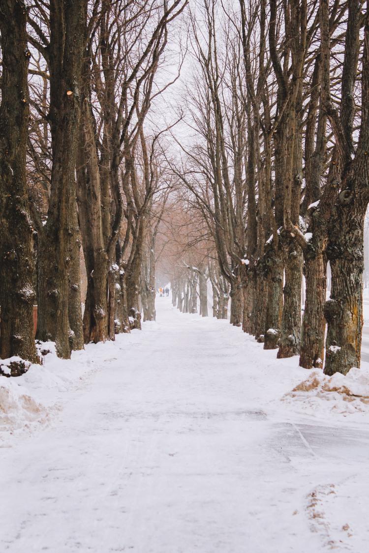 Tallinn Estonia mùa đông