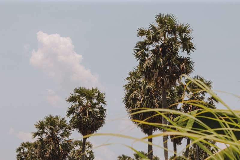 Hàng thốt nốt ở An Giang