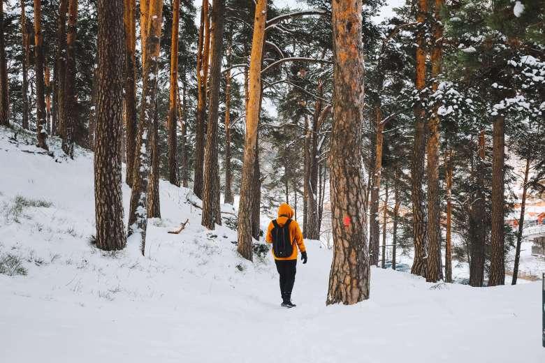 Rừng Helsinki