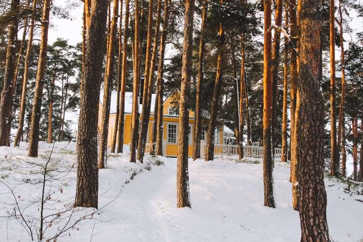 Rừng trong thành phố Helsinki