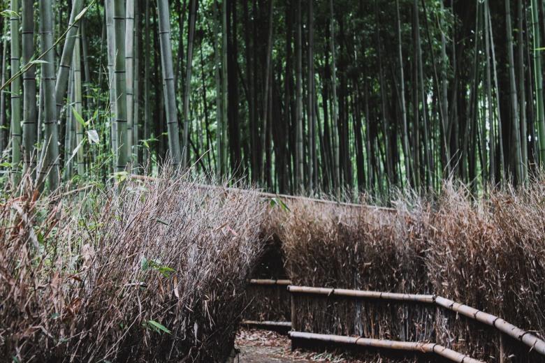 Arashiyama Kyoto Venturology Bamboo