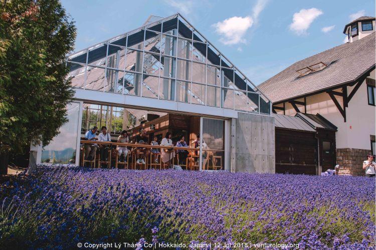 Lavender Farm Hokkaido Venturology 10