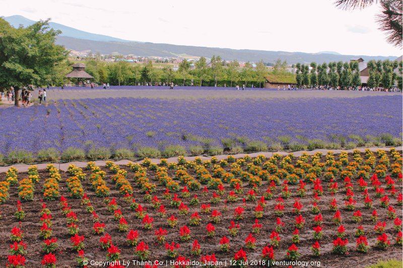 Lavender Farm Hokkaido Venturology 3