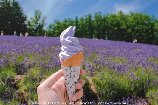 Lavender Farm Hokkaido Venturology 4