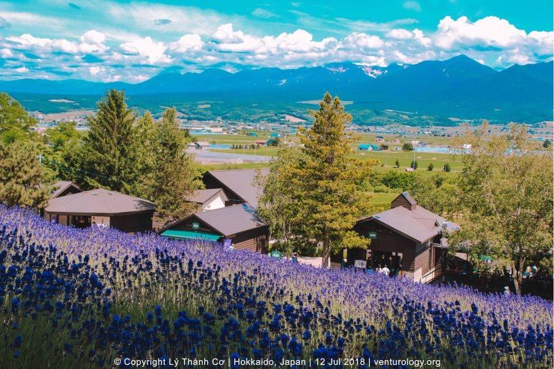 Lavender Farm Hokkaido Venturology 5
