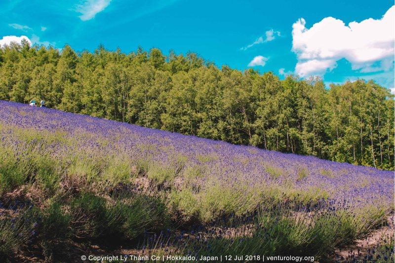 Lavender Farm Hokkaido Venturology 6