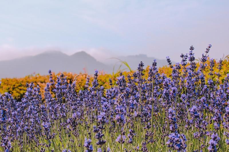 Vườn Quốc Gia Shikotsu-Toya Hokkaido Nhật Bản Venturology