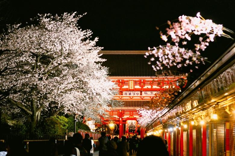 lịch trình du xuân nhật bản 7 ngày (tokyo - kyoto - osaka)