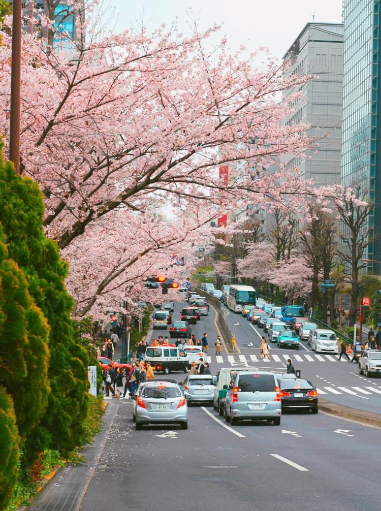 lịch trình du xuân nhật bản 7 ngày, từ tokyo Đến osaka 2