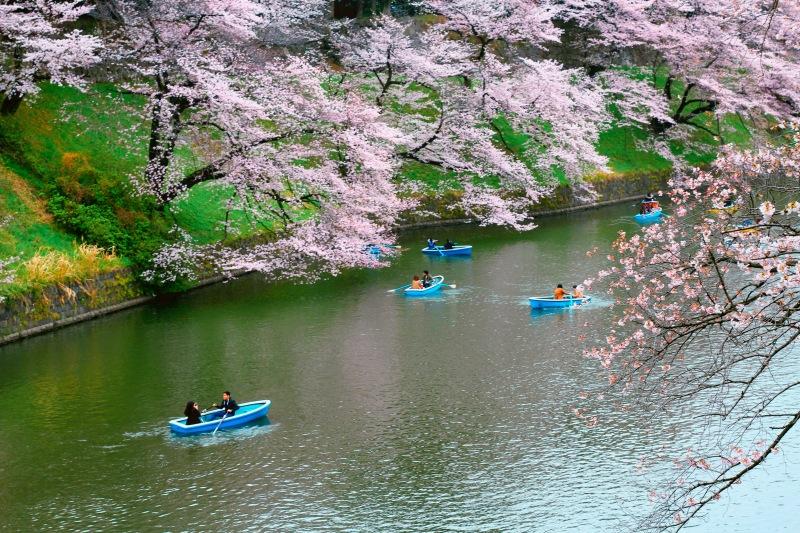 lịch trình du xuân nhật bản 7 ngày, từ tokyo Đến osaka