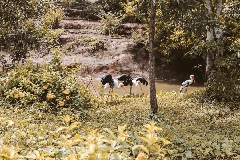 Safari Phú Quốc Lý Thành Cơ Travel Blog 3
