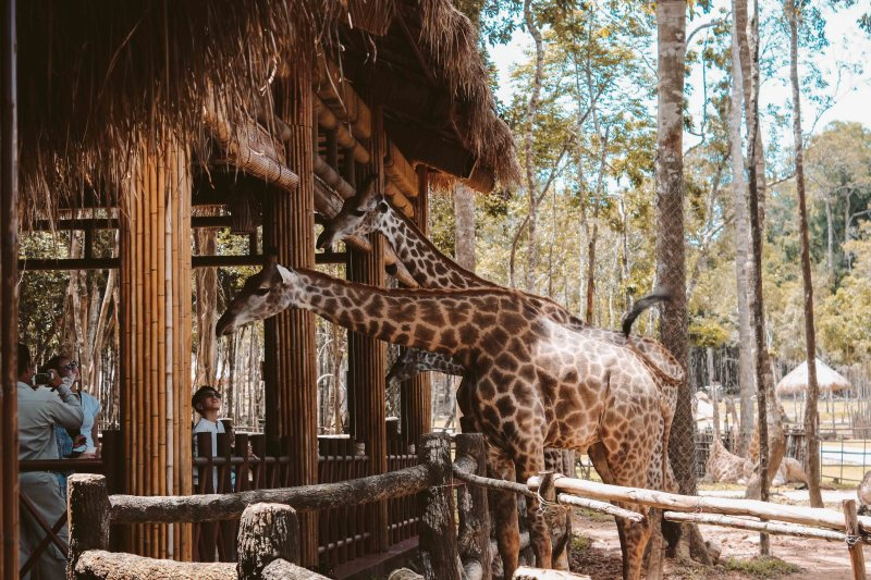 Safari Phú Quốc Lý Thành Cơ Travel Blog 6
