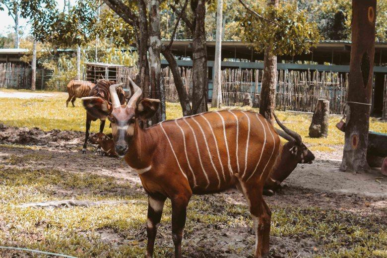 Safari Phú Quốc Lý Thành Cơ Travel Blog 7