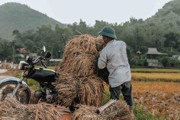 Mai Chau Ly Thanh Co 8